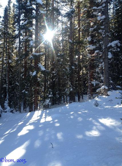 sunlight through the forest snowmass