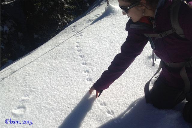 aces aspen snowmass snowshoe