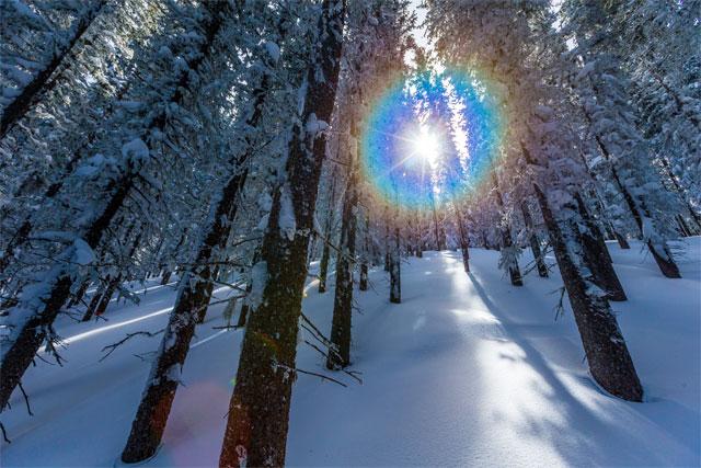 taos tree skiing