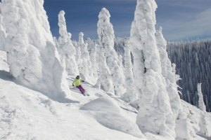 We Asked. You Answered. More Of North America's Best Tree Skiing