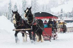 silver-star-mountain-resort-sleighride