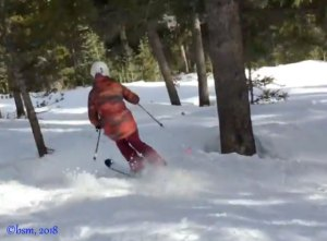 Ski Tip: Three Tricks for Skiing the Trees