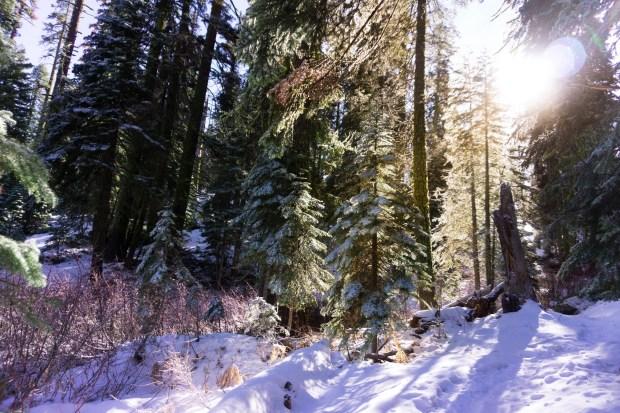 snowsemitesmall