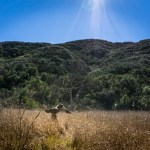 Meadow Bliss. Backbone Trail. Malibu, CA.