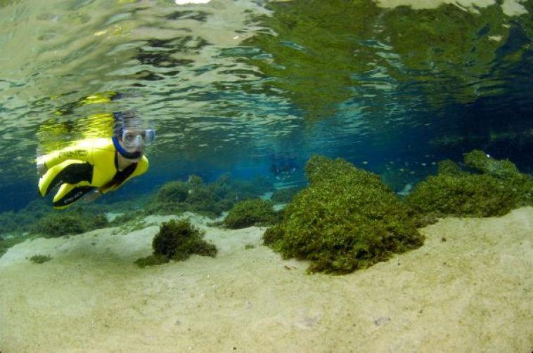 Snorkelling in Bonito