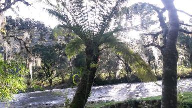 Jurassic tree ferns- Serra Geral- Santa Catarina