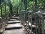 水鹿出沒? 田中森林公園驚傳登山客遭水鹿踢斷肋骨