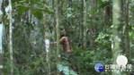 世上最孤獨的人! 亞馬遜族人遭屠殺獨活23年