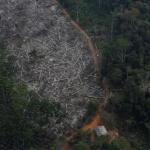 5200萬公頃!21世紀以來巴西森林遭砍伐面積為全球最多