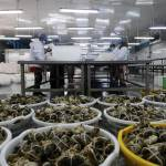 一隻螃蟹也沒賣每張蟹券淨賺440元 送禮經濟太容易割韭菜
