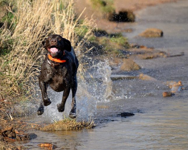 Tex is full of energy on Backcountry fuel