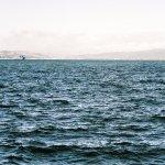 Wellington - Harbour