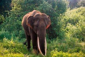 Elephant at Udawalawe National Park - Sri Lanka