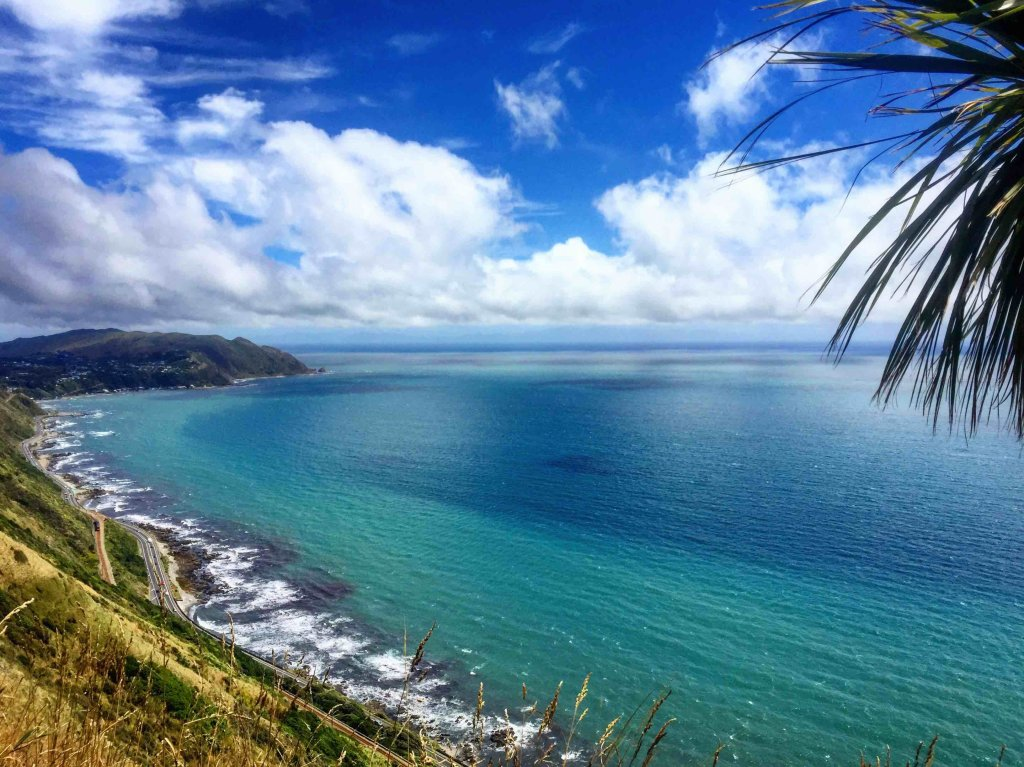 Bushwalks in Wellington
