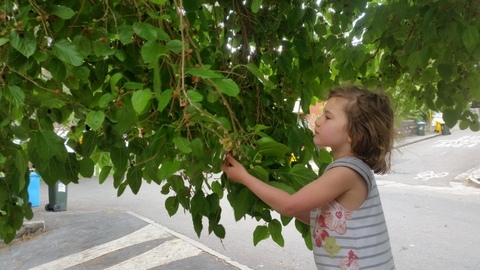 mulberry foraging