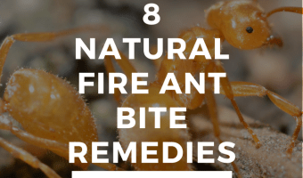 8 Ways To Naturally Treat A Fire Ant Bite