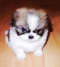 attitudedog