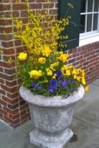 Cut forsythia branches, yellow ranunculus, purple pansies, purple and yellow violas.