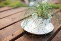 Tea Cup Garden For Breast Cancer Garden Therapy