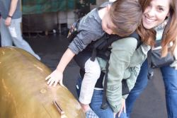 Babywearing my 3-year-old in our LilleBaby Toddler CarryOn during our visit to Seattle.