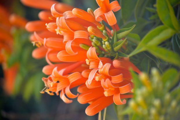 Orange Closeups