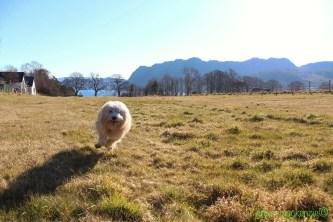 Molly running in field