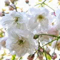 Spring Tales