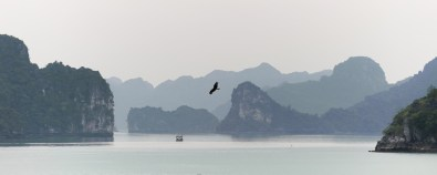 A sea eagle in Halong Bay