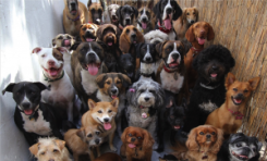 100s of doggy guests!