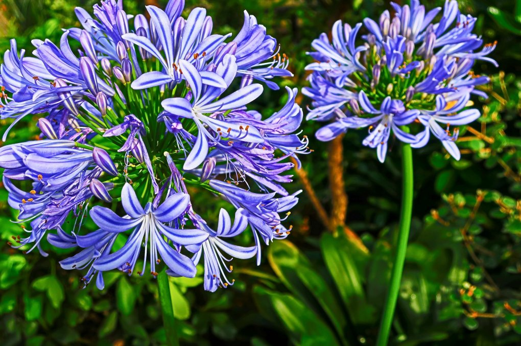 Photo of purple flowers in the Duthie Park Winter Gardens