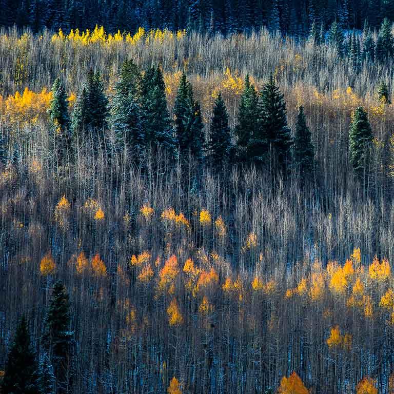Breckenridge Law Aspens in Fall and Winter