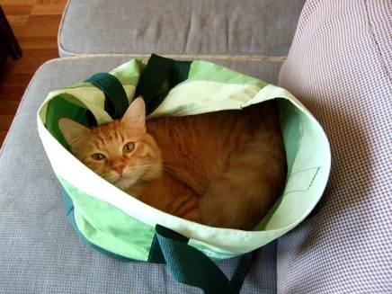 ginger_tabby_cat