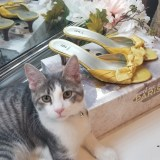 Poshmark Bakers Kitten Heels in Yellow