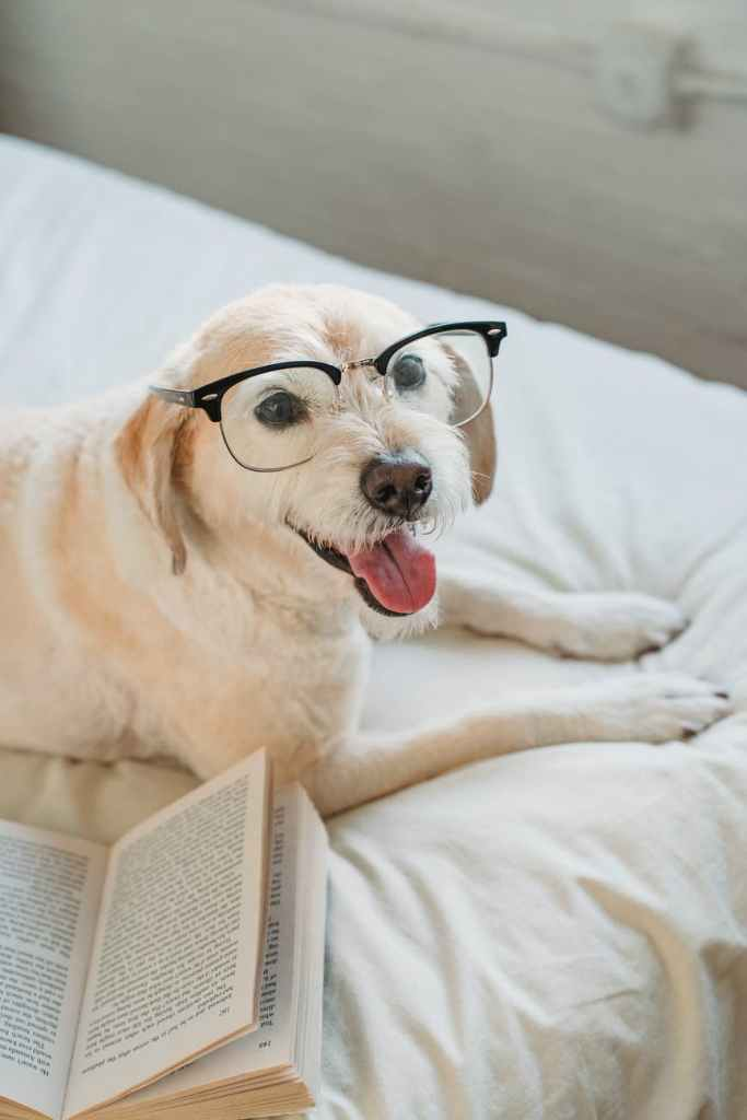 dog in glasses lying on bed