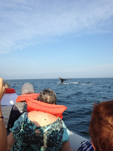 whale watching (Copy)