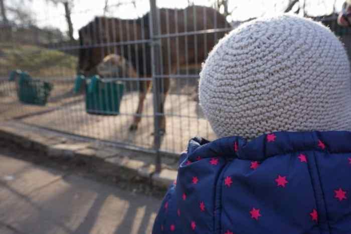 Kinder- und Jugenfarm - Wochenende mit Kind in Darmstadt von breifreibaby