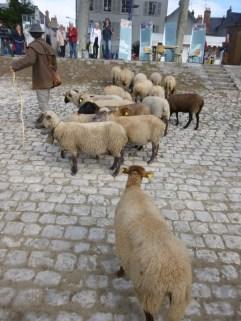 des moutons qui paissent habituellement sur un bord de Loire particulièrement pentu, près de l'écluse du Canal d'Orléans