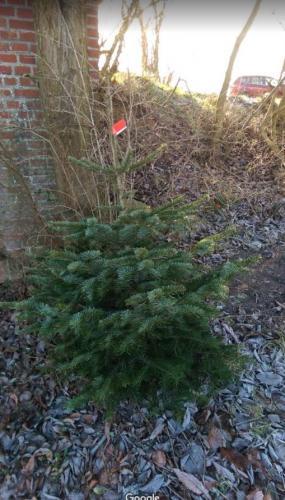 Brejnholts Juletræer 009