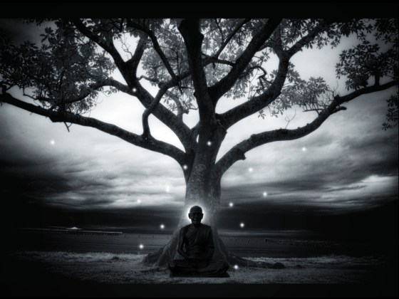 tree meditatioin