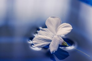 white flower on water