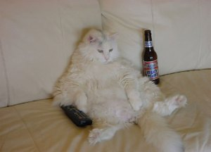 fat cat with beer and remote