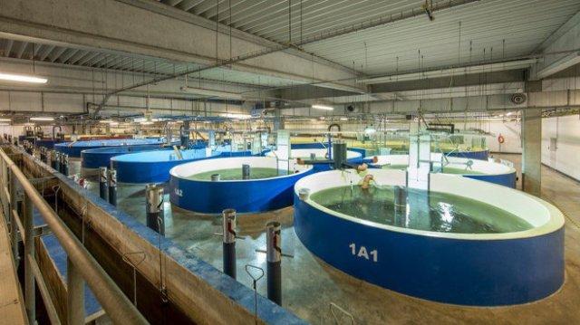 An indoor fish farm. Image copyright Aquamaof, via BBC News, used w/o permission.