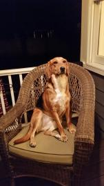 Dixie - adopted by her foster family.