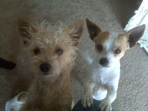 Scruffles and Dollar - placed in Nov. 2011 after 8 months at BMR.
