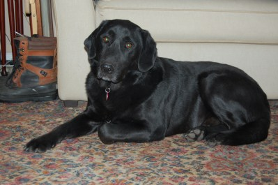 Shadow was adopted in Dec. 2013.