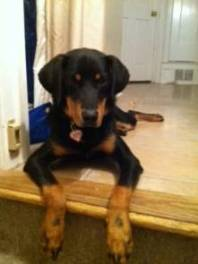 Stewie was adopted by his foster family in Sept. 2013.