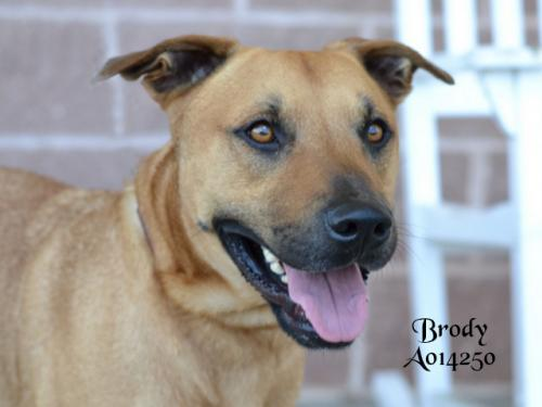 Brody in Foster