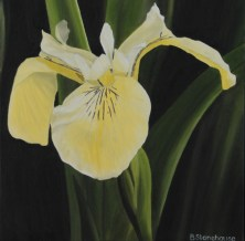 """Pond Iris"" Brenda Stonehouse 12"" x 12"" oil on canvas. Available for purchase."