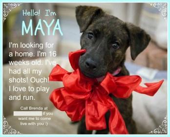 Maya FB