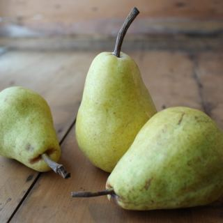 Pear Recipes: Easy Pear Sauce and Pear Fruit Leather